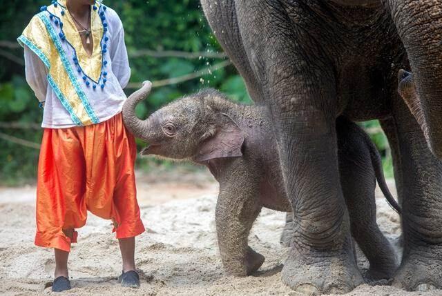 广州长隆野生动物世界亚洲象园