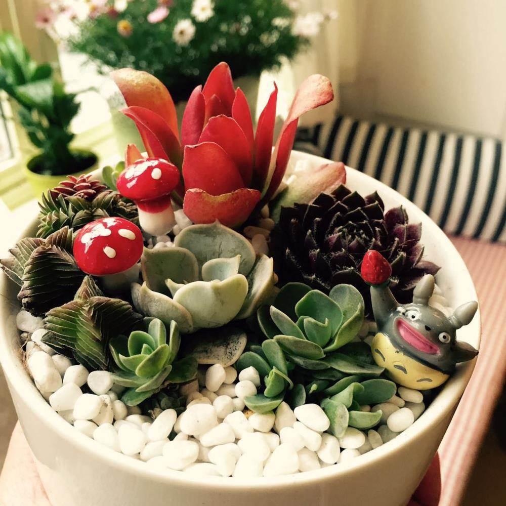 【植物景观diy】多肉盆栽&苔藓玻璃球