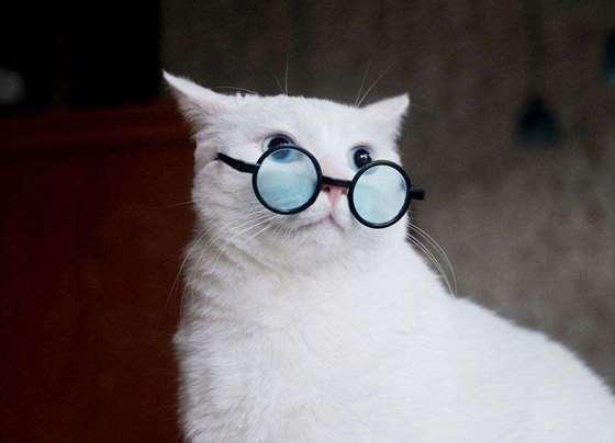 酥饼和眼镜.jpg