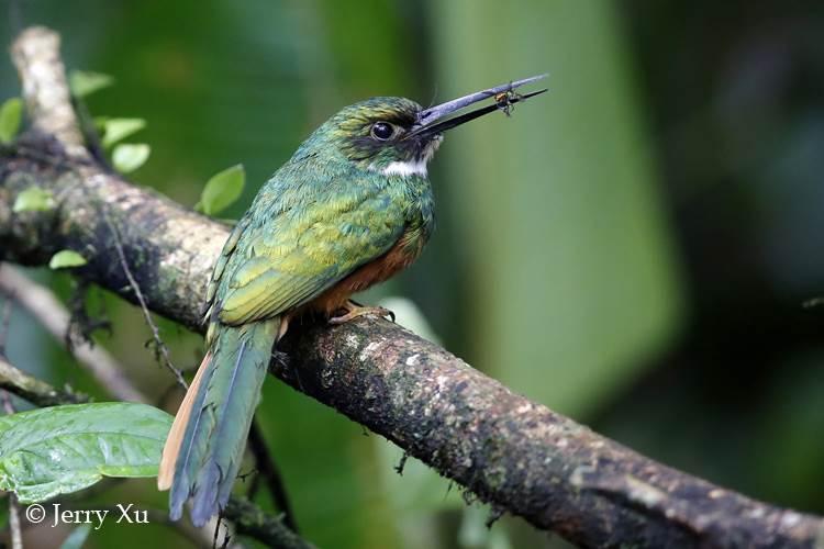 特有的热带雨林野生动物 (5).jpg