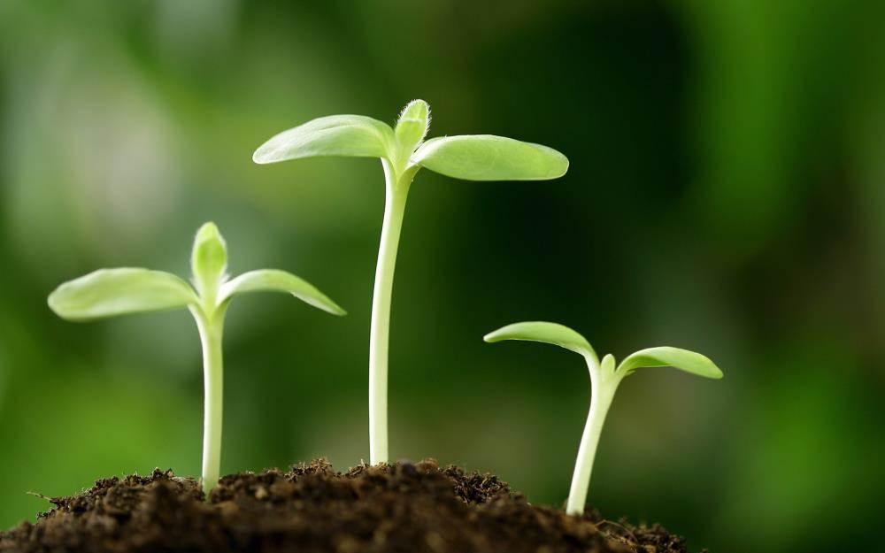 种子生长ppt图片素材