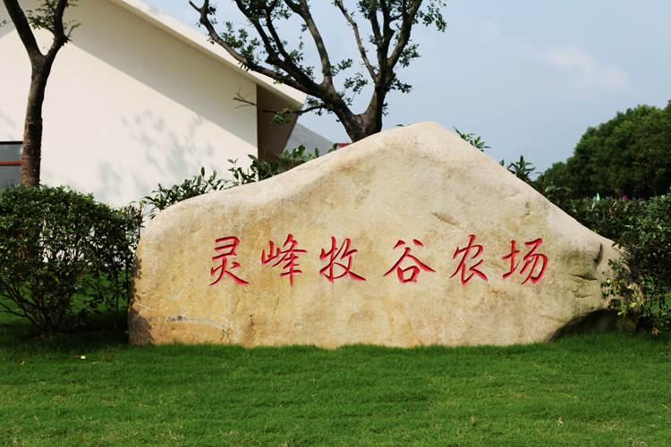 灵峰镇地图
