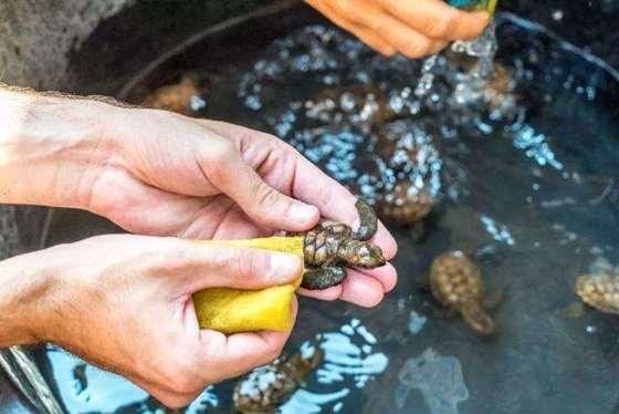 海龟保育.jpg