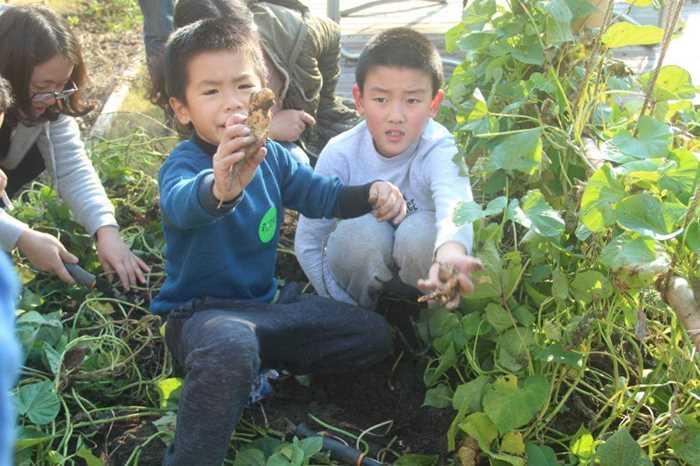 12月3日自然课:红薯食物链以及挖红薯体验_meitu_2.jpg