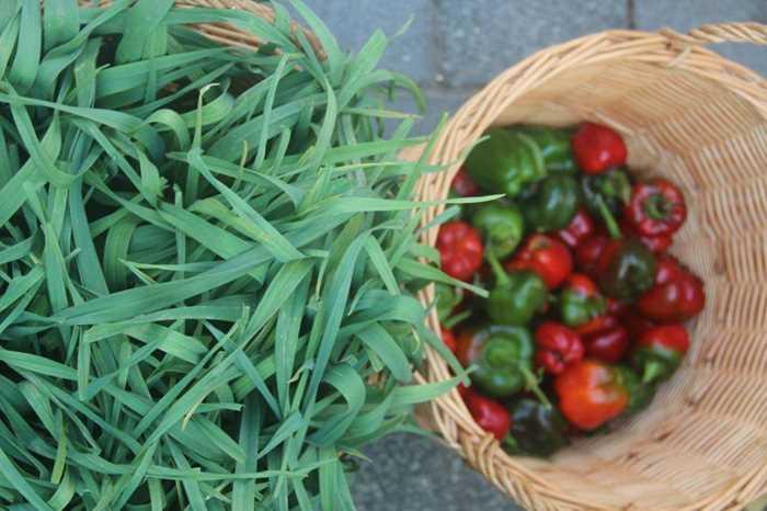玫瑰庄园的时令蔬菜_meitu_1.jpg