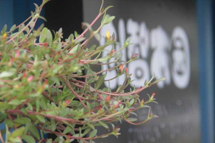 太阳花旁边的创智农园_meitu_2.jpg
