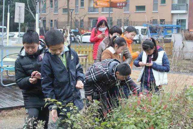 2017年1月18日自然课:喂食器制作,孩子们在农园里采摘果子作为鸟食.jpg