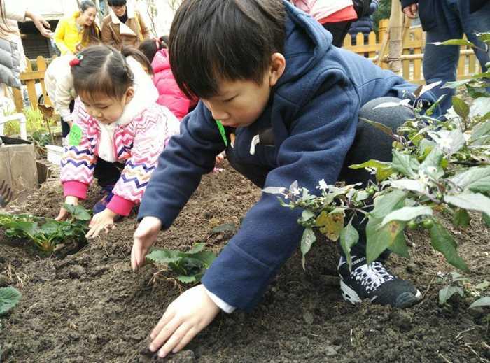 种草莓把土掩盖好_meitu_5.jpg