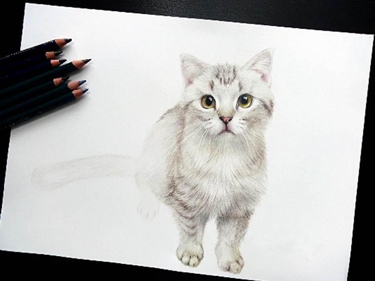 哈士奇彩铅手绘