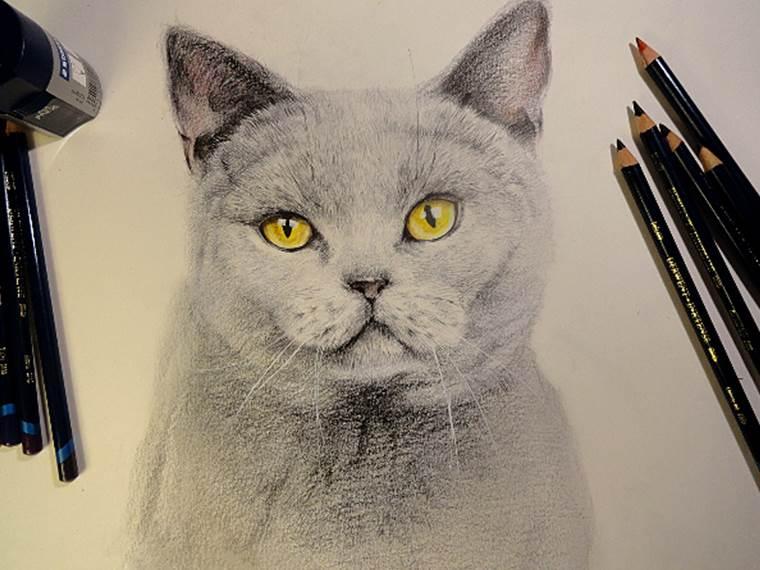 彩铅侧颜手绘教程