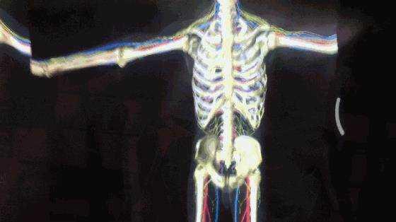 人体.gif