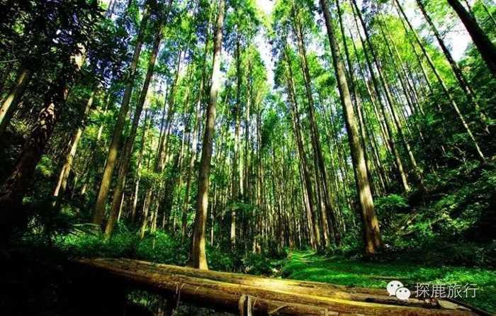 12.3 穿越徒步   去森林氧吧来一次深呼吸,洗洗你的肺