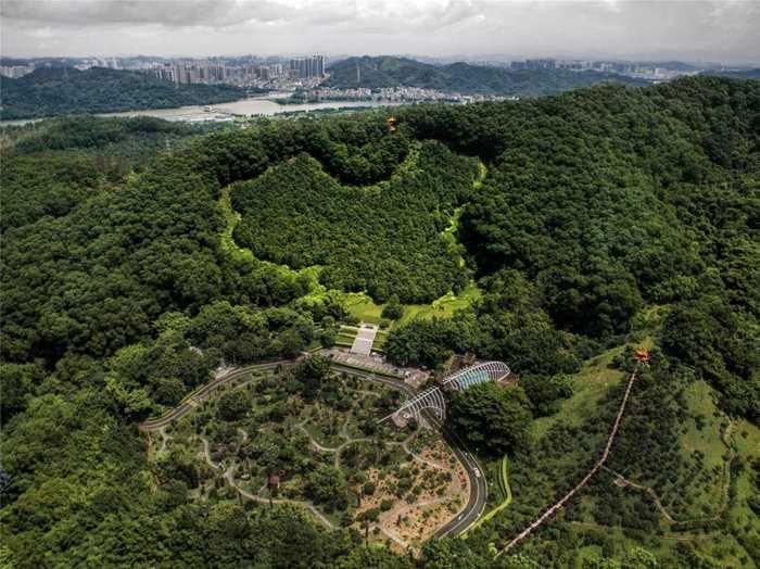 回归林+缪华+13510105092+深圳市仙湖公园 1-编辑.jpg