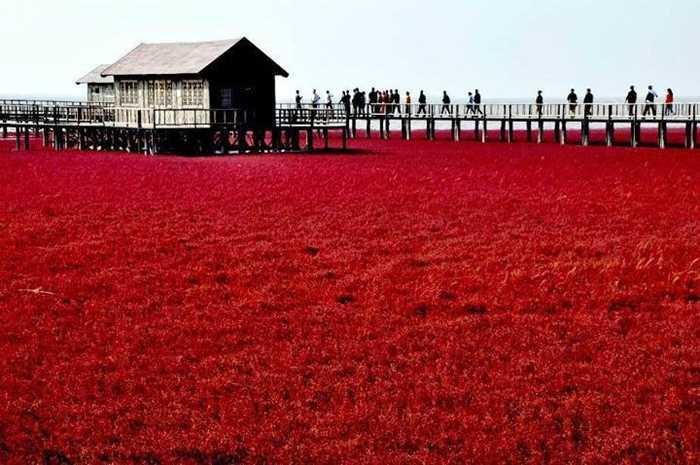红海滩8.jpg