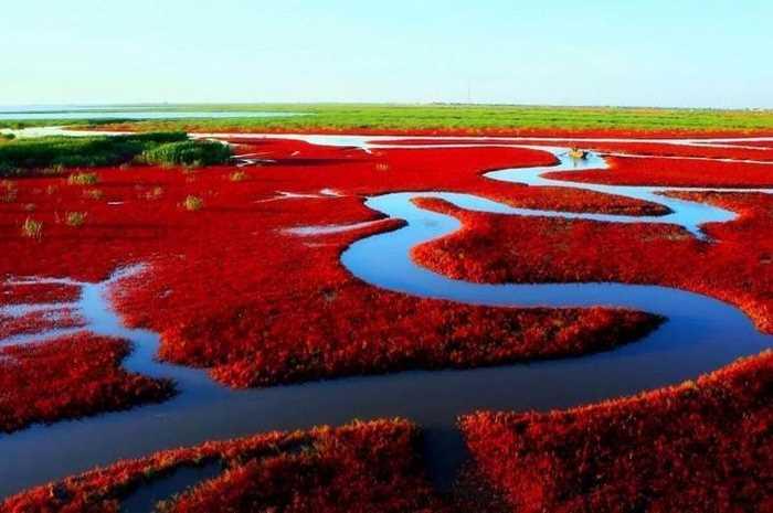 红海滩4.jpg