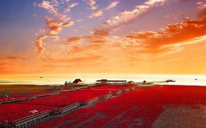 红海滩3.jpg