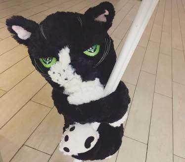马丁猫1.jpg