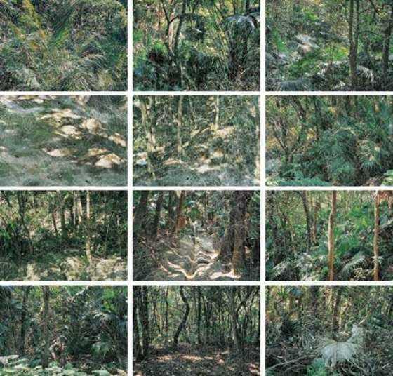 立体丛林.png