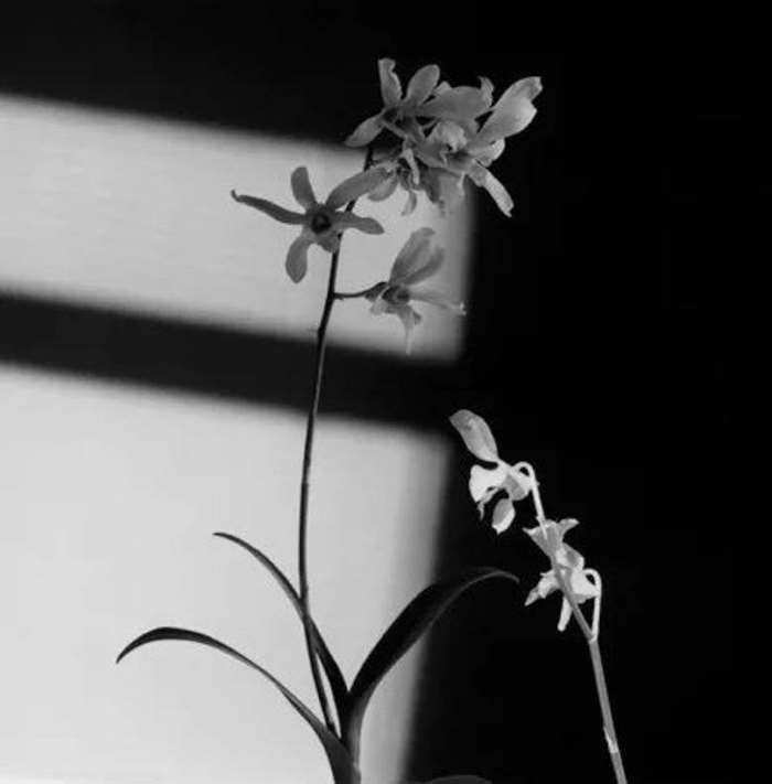 © ROBERT MAPPLETHORPE, Flower, 1986. Courtesy of Galerie Thaddaeus Ropac (Paris, London & Salzburg) .png