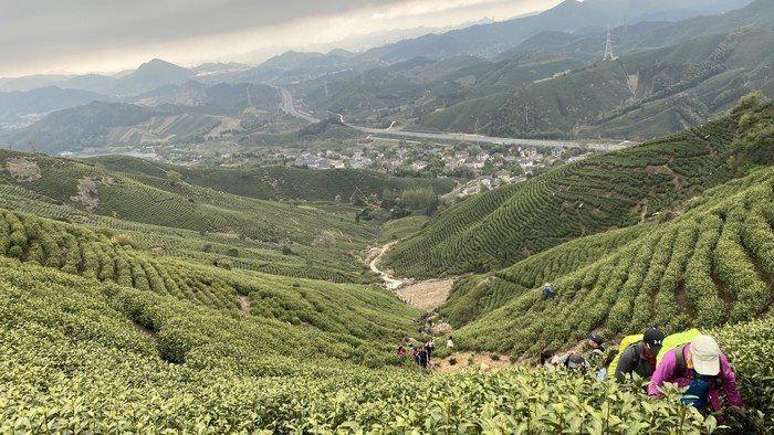 城山茶田.png