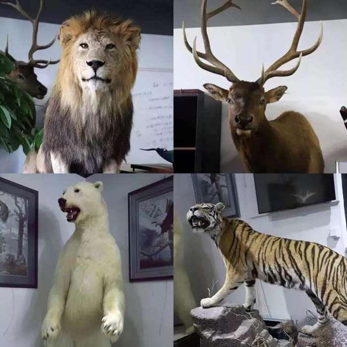 4、动物.jpg
