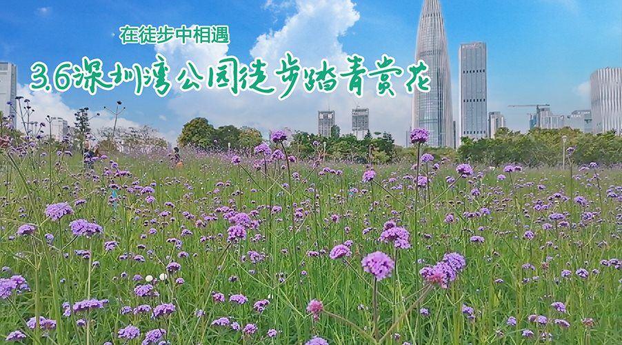 深圳湾1.png
