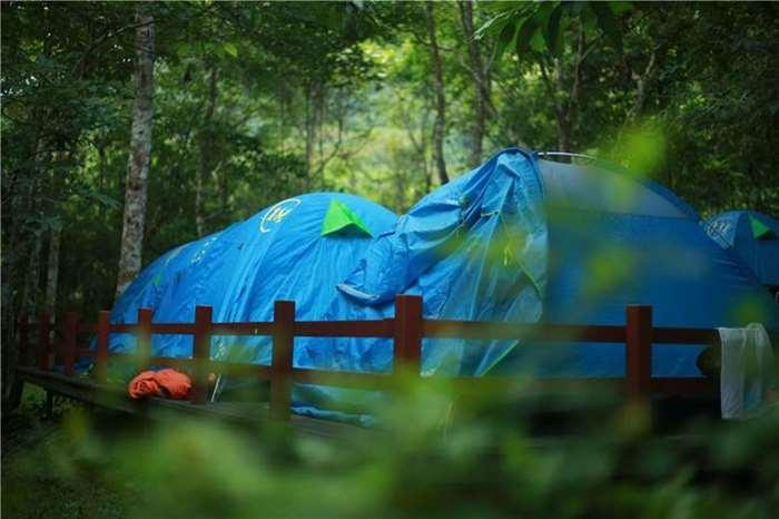 雨林露营 小图.jpg