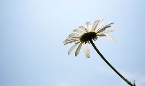 花儿,这或艳,或素,或浓香,或清淡的精灵,跃动在山川河谷,穿行于