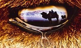 上海世界音乐季 | 世界音乐纪录片赏析(哭泣的骆驼)