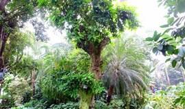 12月12日活动:植物王国探秘——走进花卉大观园认植物