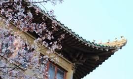 2016樱花期间预约参观武汉大学校园(官方唯一预约通道)