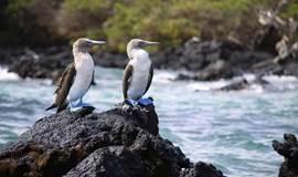 一国四境,美好国度, 一切尽在厄瓜多尔! ——野去自然旅行厄瓜多尔分享会