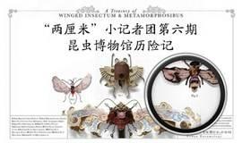 """城生活""""两厘米""""小记者团昆虫博物馆报名"""