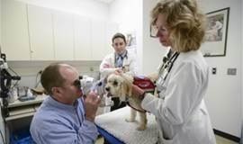 兽医培训|眼科泰斗大卫·马格斯率呼吸科等国际专家3月抵华开讲