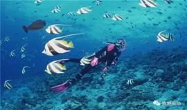 【五一假期】南澳珊瑚潜水 带您走入神秘的海底世界快艇出海烧烤BBQ