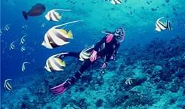 每天南澳珊瑚潜水 带您走入神秘的海底世界快艇出海烧烤BBQ