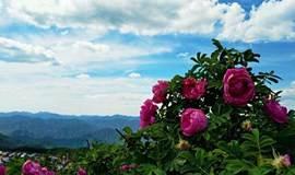 【6月18日】去妙峰山看千亩玫瑰花开,阳台山至凤凰岭穿越