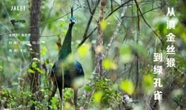 奚志农:为拯救仅存的500只绿孔雀开始行动