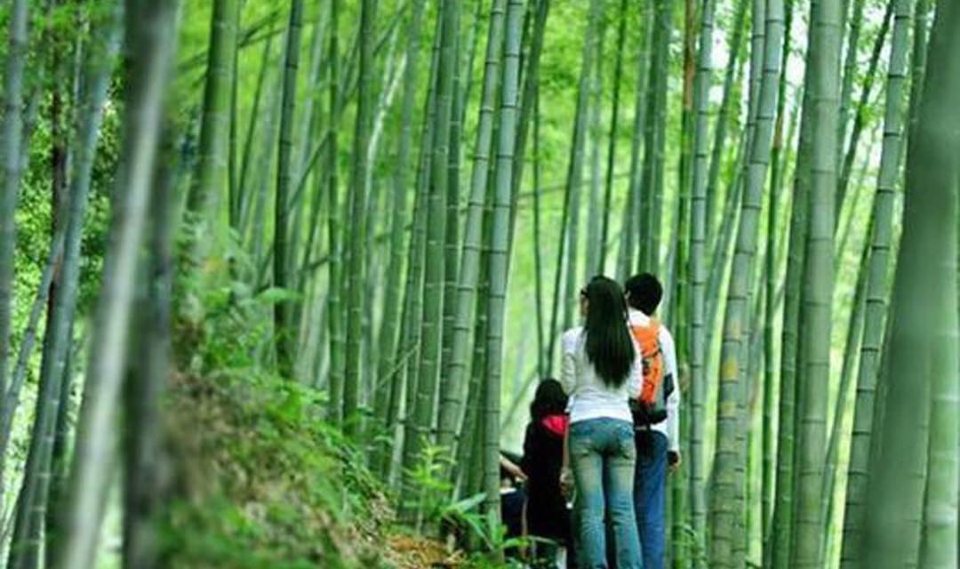 【徒步入门】每周日 星溪线-徒步广州最美入门级路线