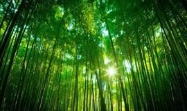 9.23 从化天溪线徒步,赏山水田园竹林美景,品农家特产