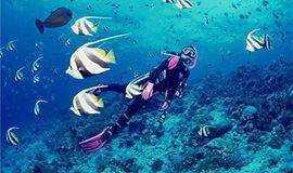 五一假期 3期【潜水体验】南澳珊瑚潜水 带您走入神秘的海底世界快艇出海烧烤BBQ