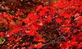 【52户外】10月14日怀柔喇叭沟门赏红叶一日游 | 含车费午餐门票保险