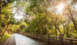 """徒步梅林绿道,在葱笼绿意中寻访深圳""""二线""""历史痕迹"""