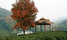 爱情魔法大挑战 | 十里琅珰 万林背山 | 杭州CityWalk交友派对