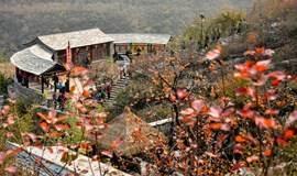 早知【坡峰岭】何必去香山 看京郊最晚的红叶 品当地农家饭 一日活动
