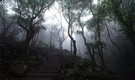 相约深圳——爬山交友 , 酣畅淋漓赏梧桐