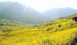 【周末-已成团】相约覆卮山:徜徉高山梯田,赏层层叠叠的油菜花(1天活动)