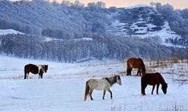 [2018年元旦]乌兰布统赏雪 越野车穿林海雪原-看万马奔腾-水墨般雪景!