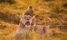 下壹站旅游季分享会—走进非洲野生动物
