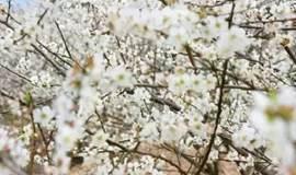 【梅花枫叶】12.31(周日)从化古溪线看竹海、枫叶红,溪流山水